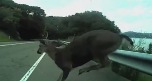 Man Hits Deer Going 30MPH On A Bike