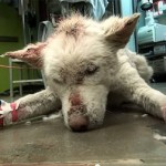 Horribly Injured Dog Rescued From A Trash Dump Makes An Incredible Recovery